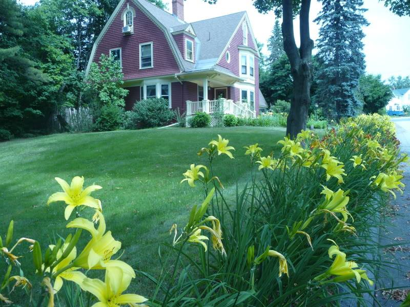'Hyperion' daylilies