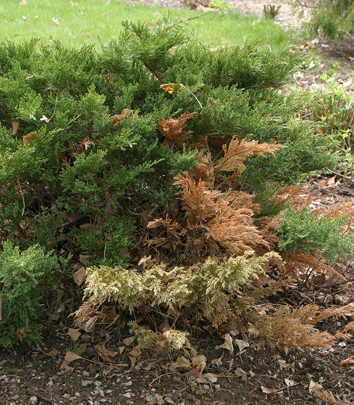 Damaged foliage