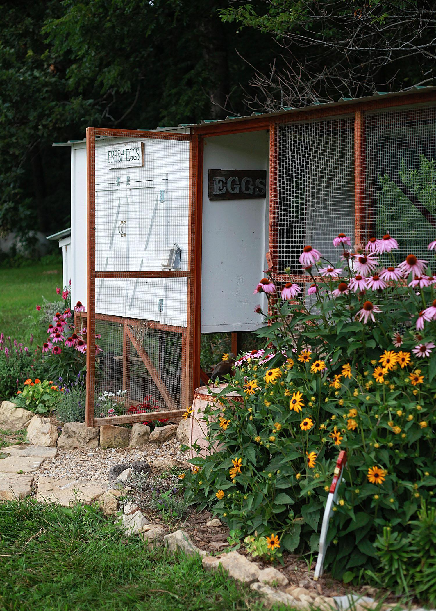 Chicken Coop Garden
