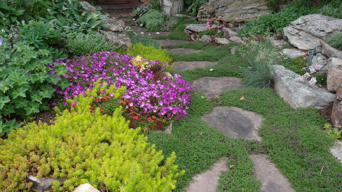 Ice plants and 'Angelina' sedum