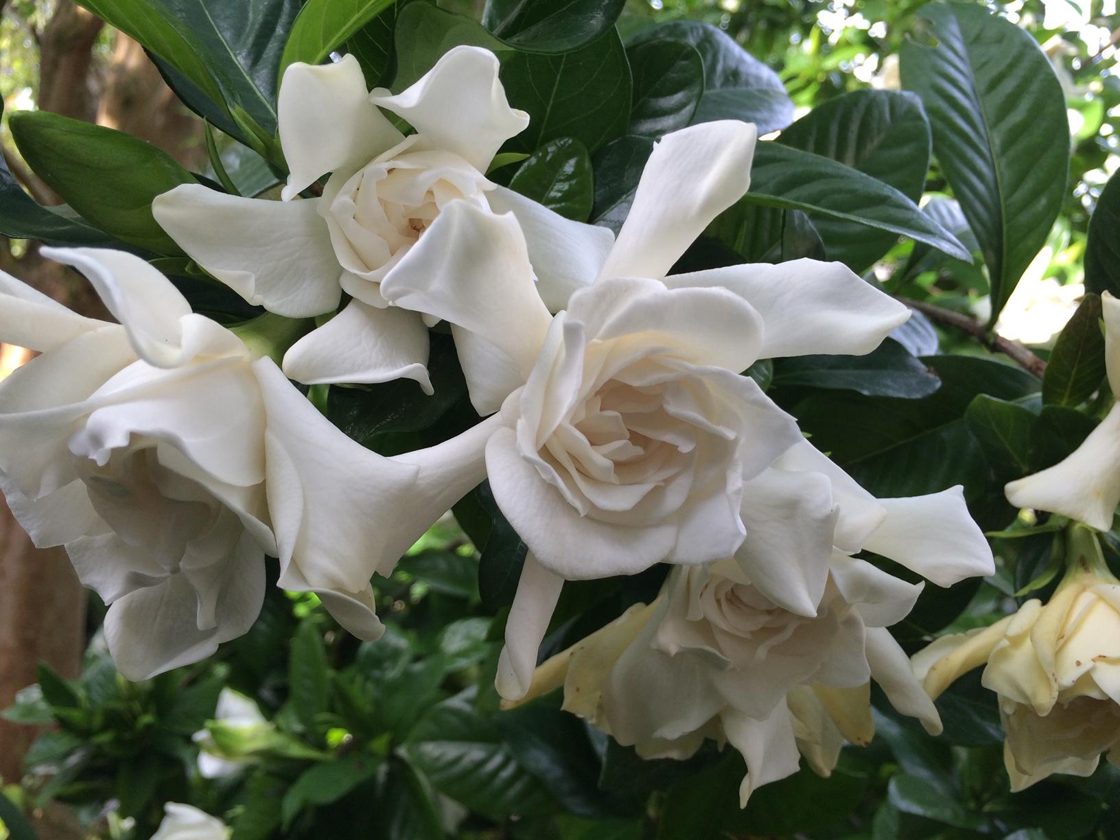 Fragrant Flowers In Florida Finegardening