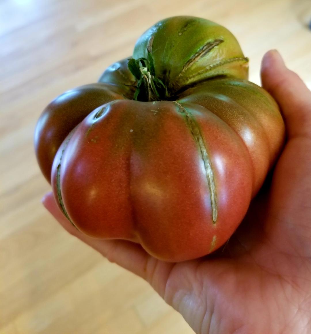 'Black' tomato