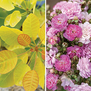 The Best New Plants for 2020: Trees and Shrubs - FineGardening