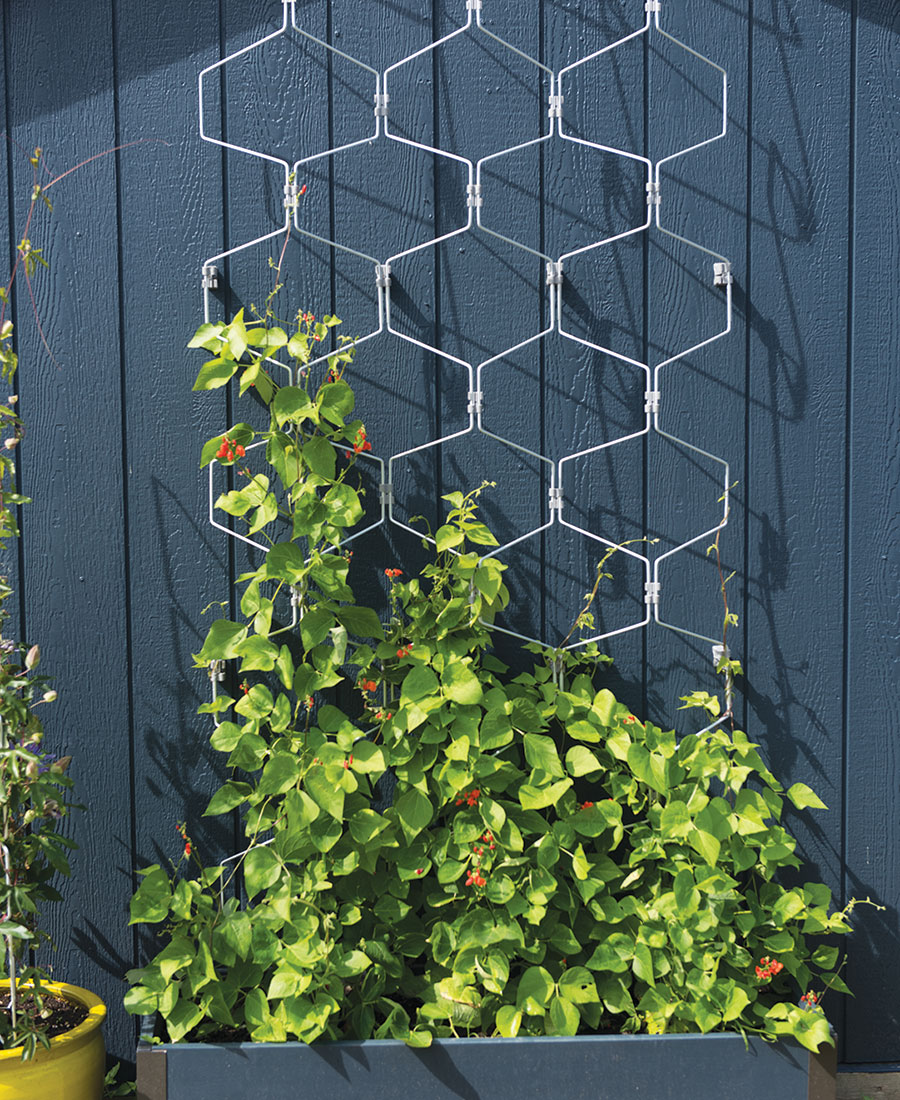Vertex Wall Trellis
