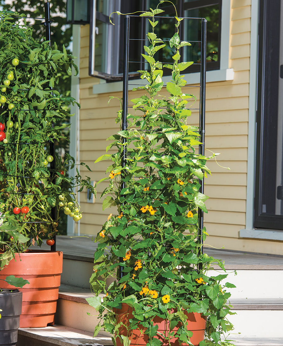Gardener's Victory Self-Watering Planter with Vine Trellis