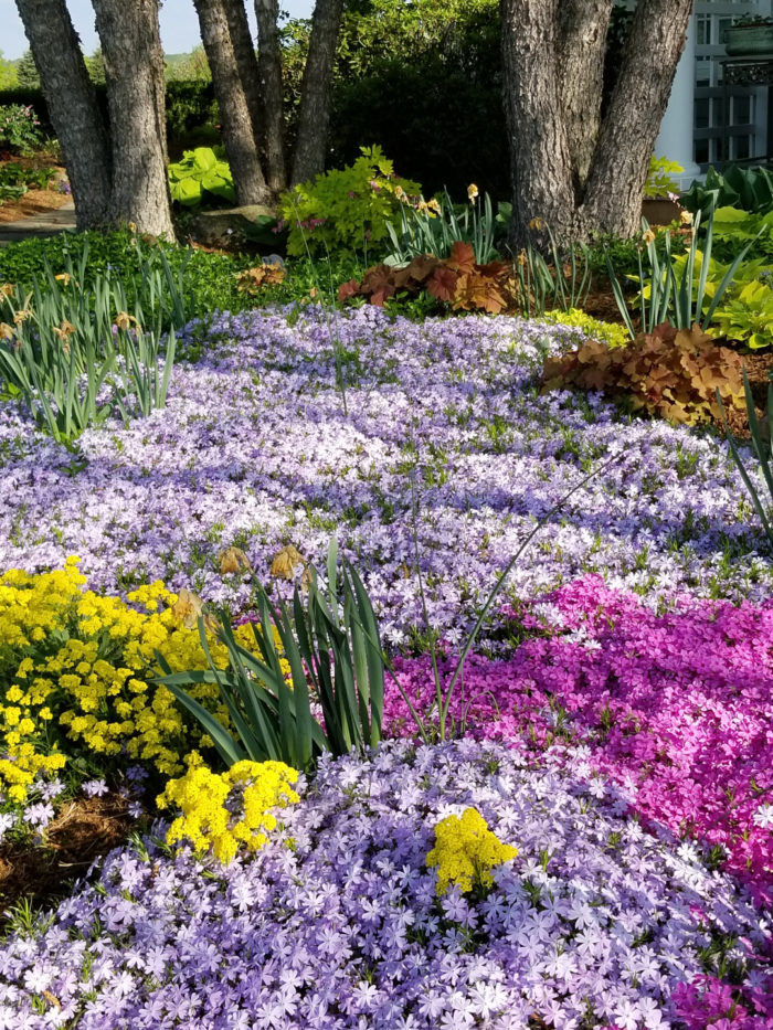 Gardens at Bellsflower Farm