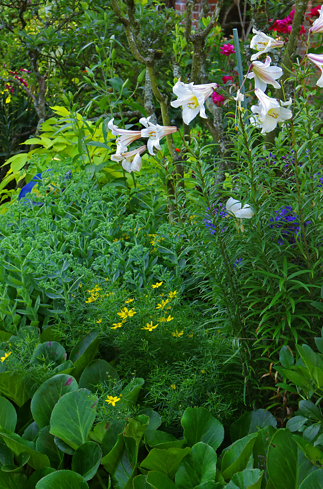 densely planted bed