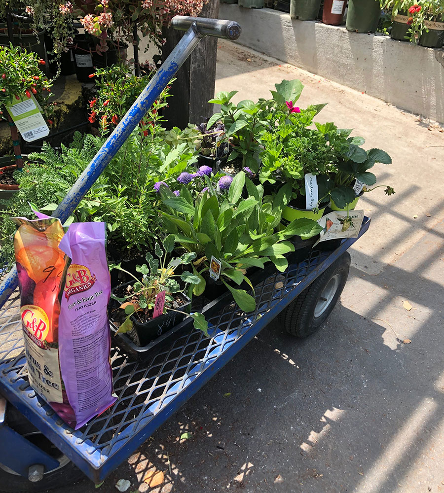 shopping at the nursery