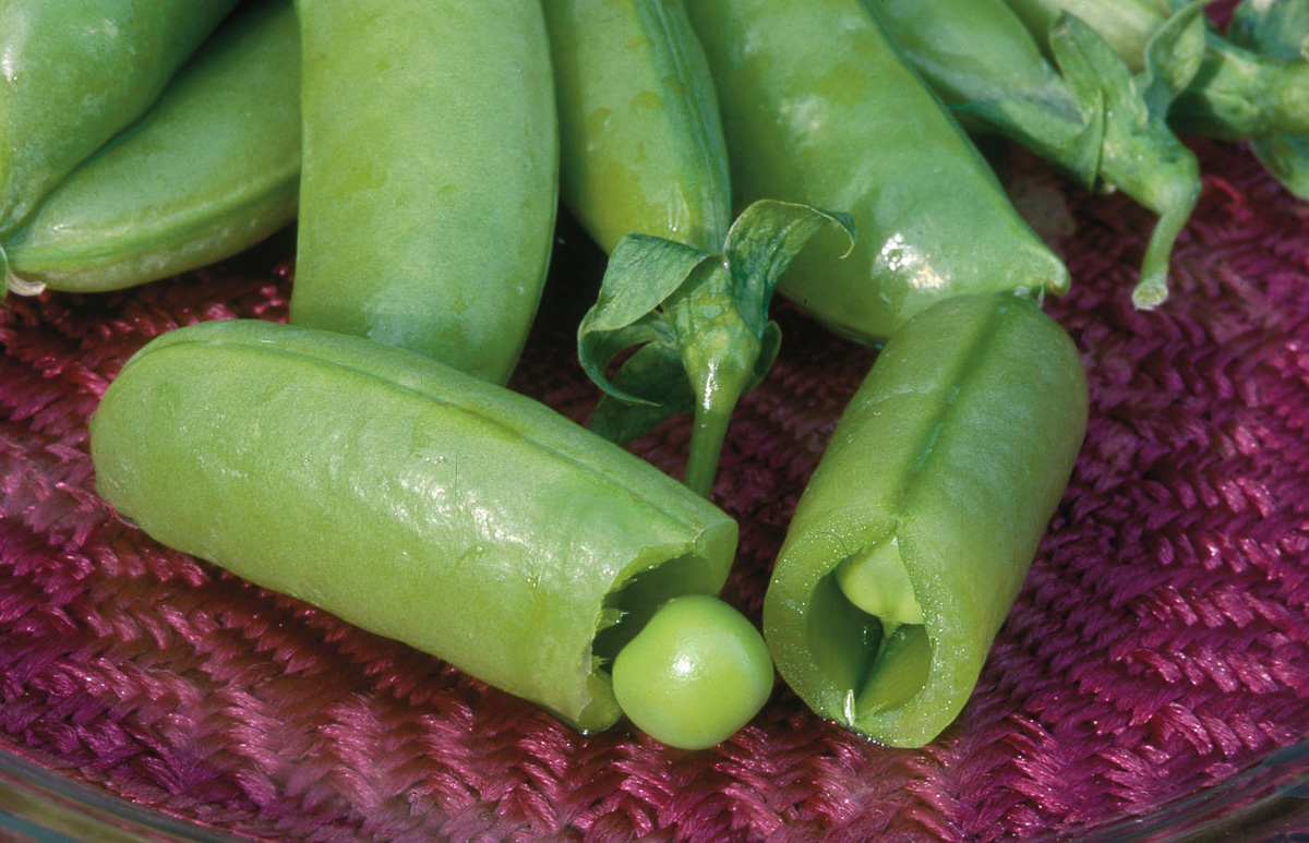 'Super Sugar Snap' pea (Photo credit: Johnny's Selected Seeds)