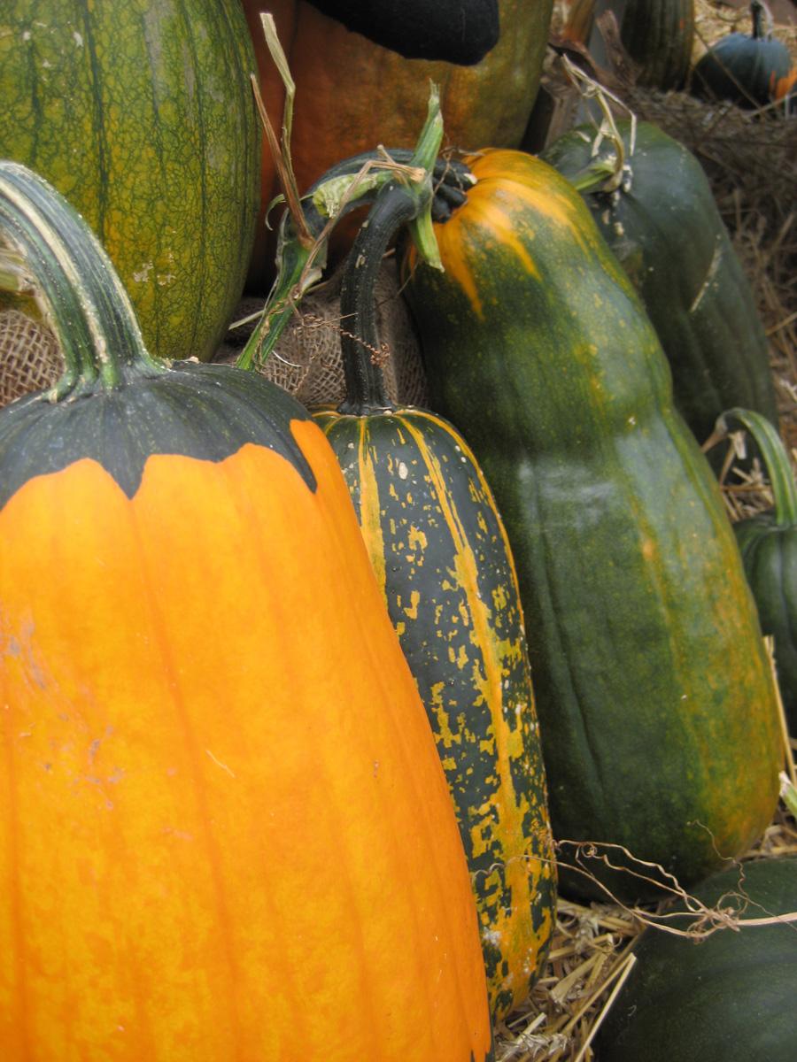 'Bob's Designer Mix' pumpkin (Photo credit: John Scheepers Kitchen Garden Seed)