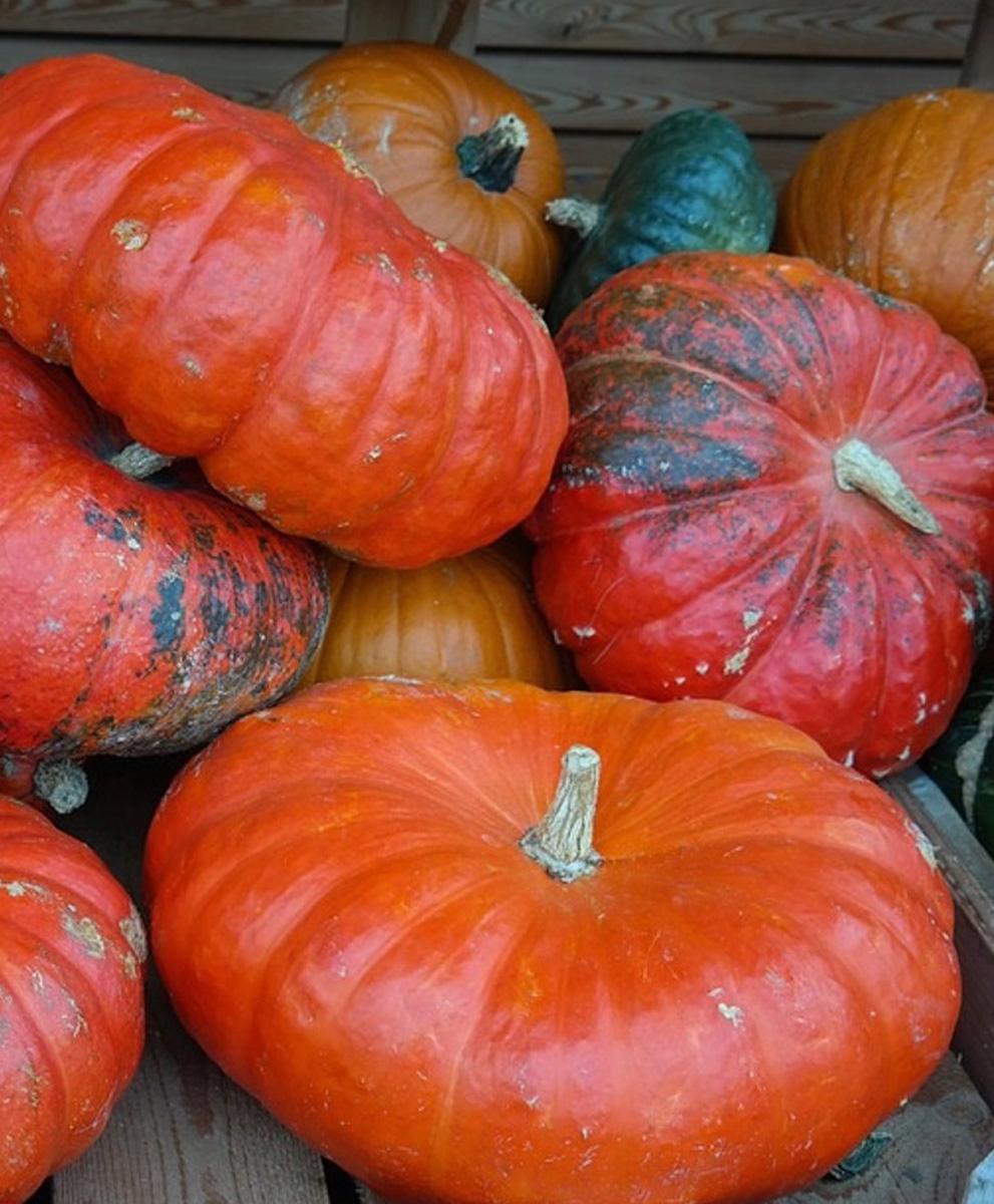 'Rouge d'Etampes' Cinderella pumpkin (Photo credit: John Scheepers Kitchen Garden Seed)