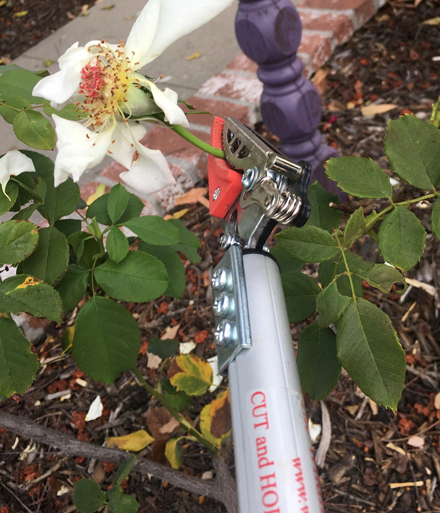 Short Reach cut-and-hold pruner
