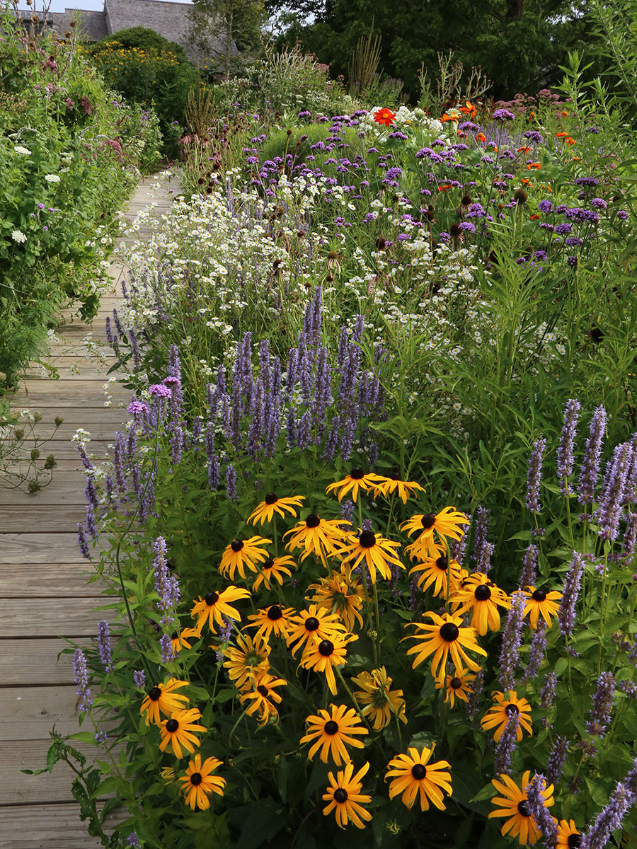 pollinator favorites such as black eyed susan and salvia help attract pollinators