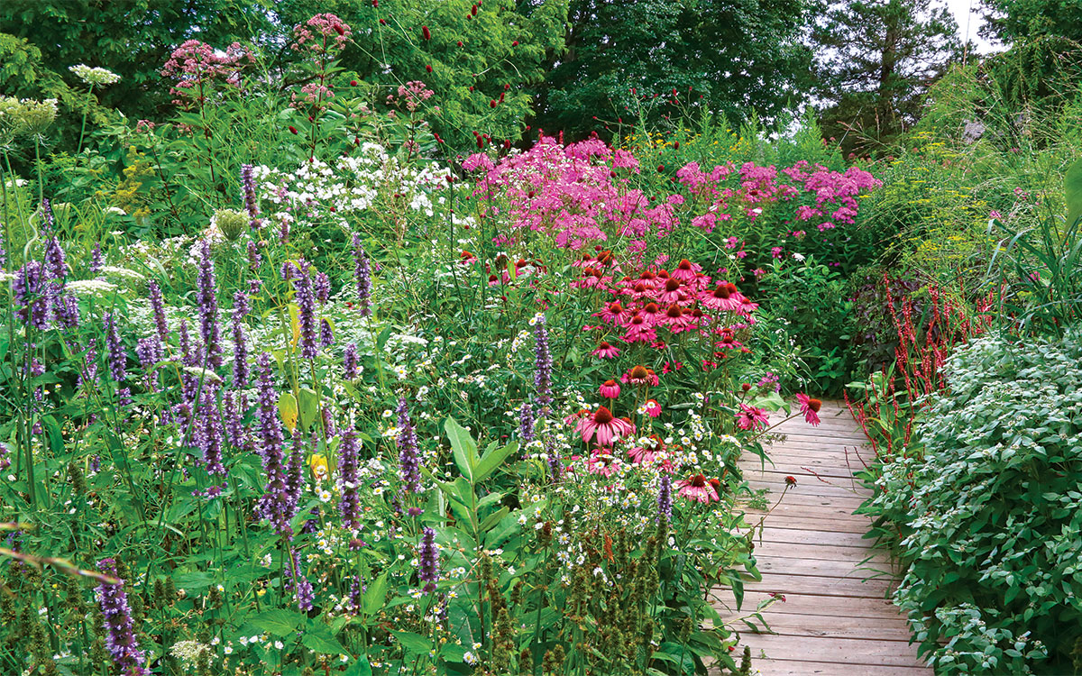 Common milkweed and other host plants are supported by showy nectar plants such as giant hyssop and blunt mountain mint