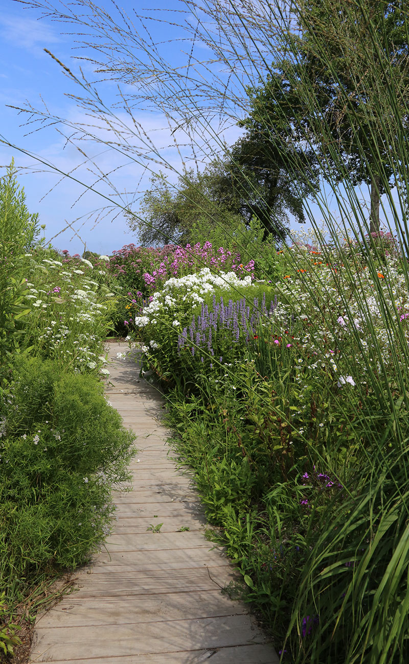 Structured plants in front help hold us pollinator plants that often bend or fall