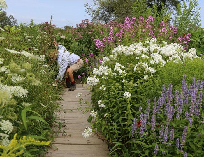 Pollinator's Favorite Nectar Plants