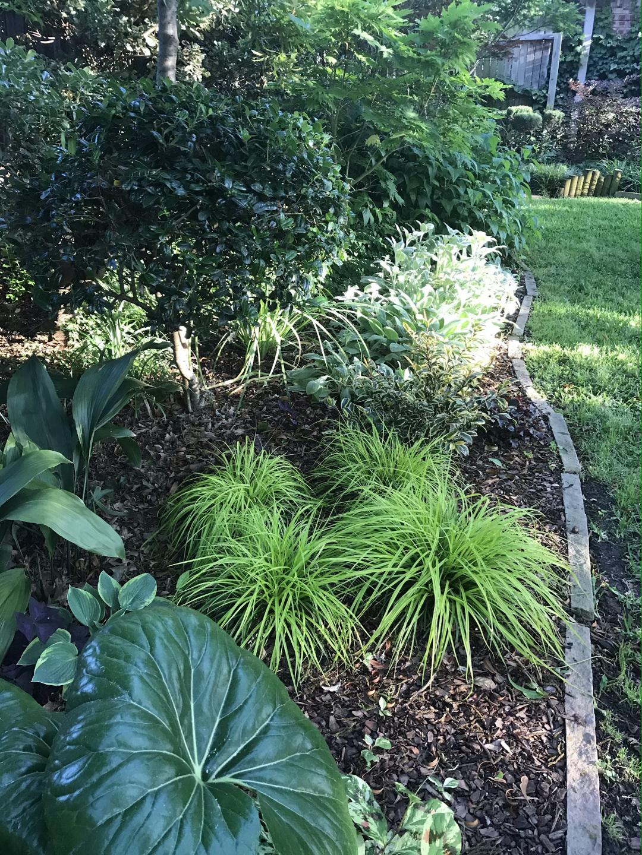 foliage bed