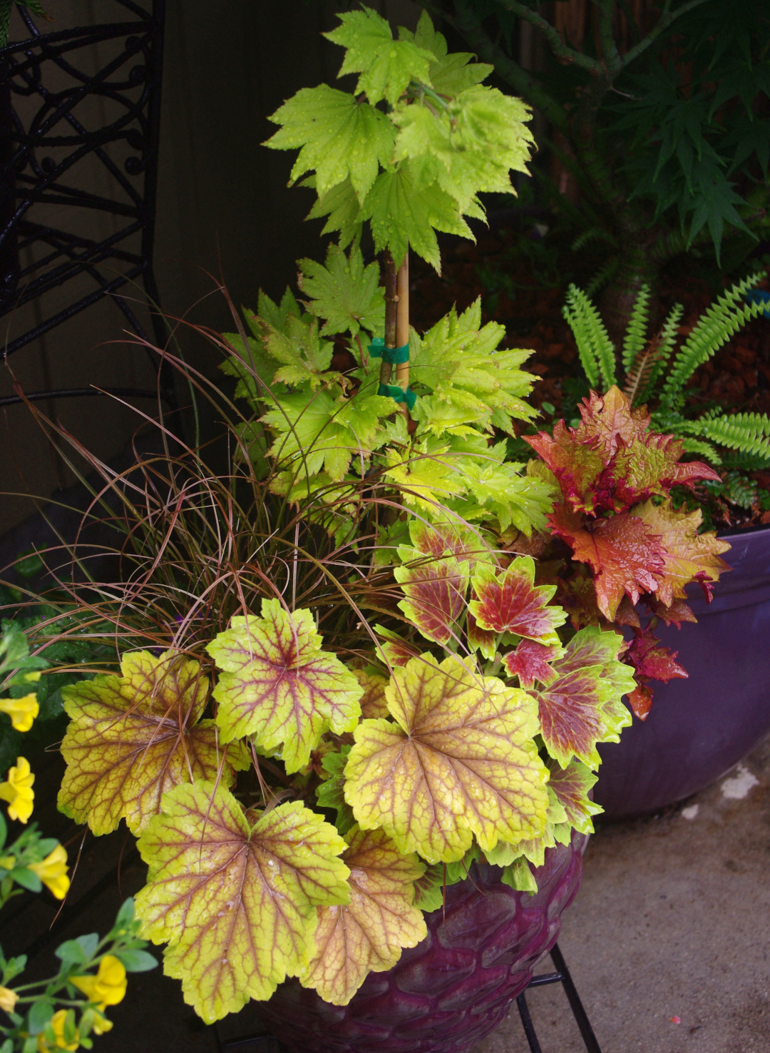 foliage plant container