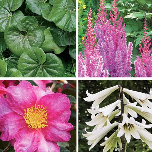 bold plants for shade