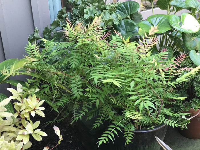 Growing Trees and Shrubs in Containers in the Midwest