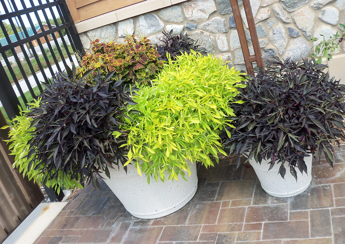overgrown container planting