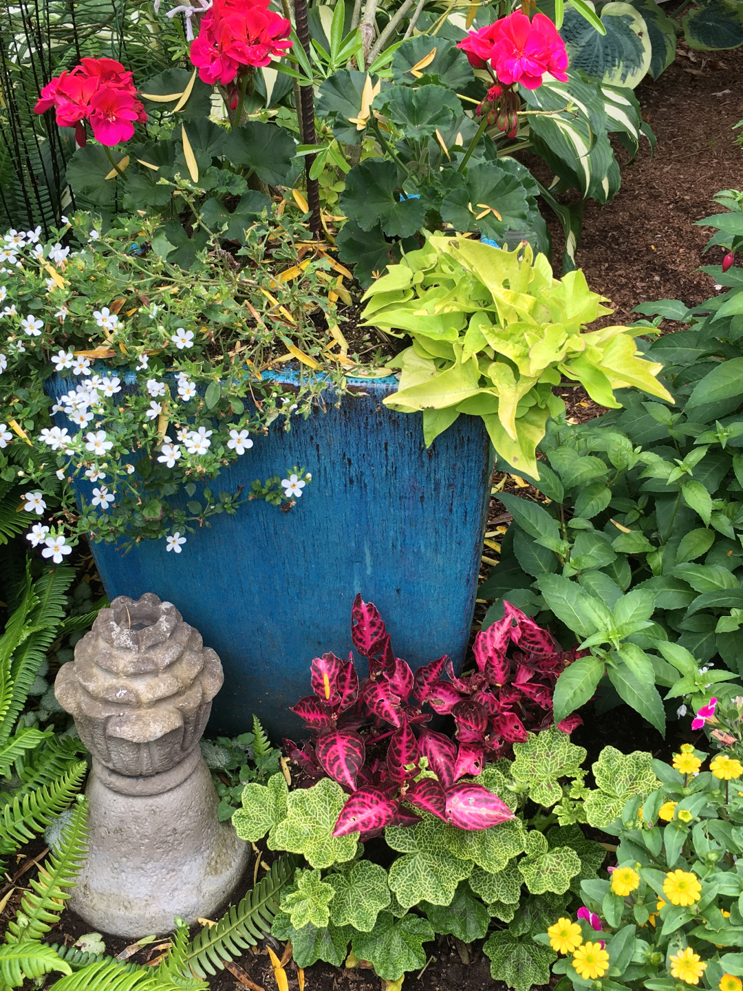 mixed planting of annuals