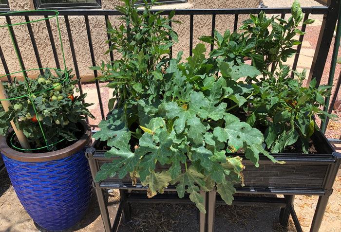 Growing Vegetables in the Desert