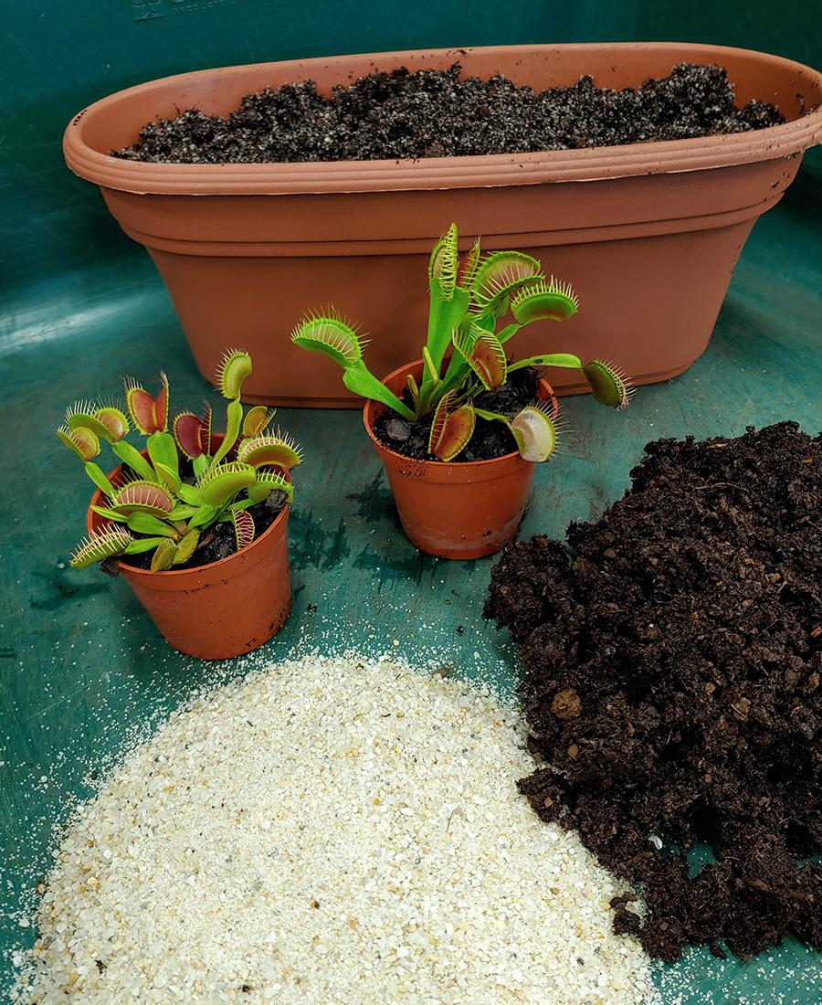 potting venus flytraps