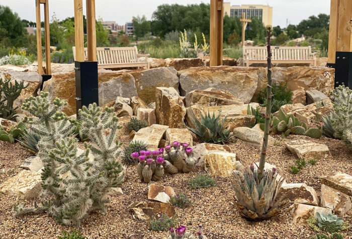 Cold-Hardy Cacti for the Mountain West