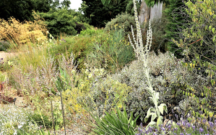 Summer-Dry Gardening, Part 1: A Visit to Beth Chatto's Gravel Garden