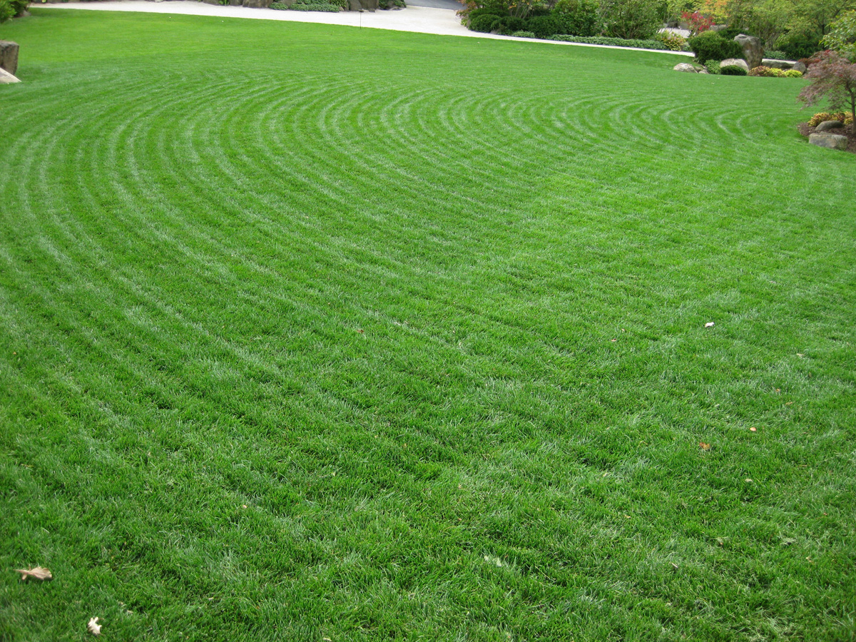 how to seed lawns
