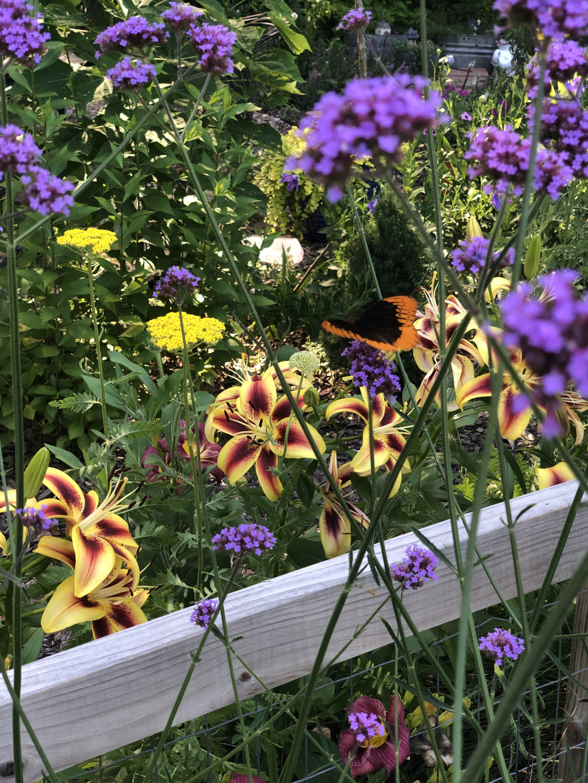 Viva la Vida lilies