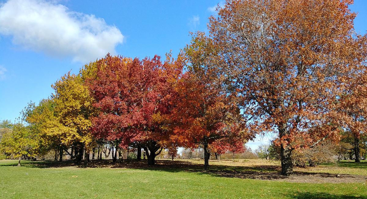 South Dakota State Arboretum