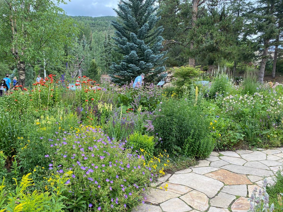 Betty Ford alpine plants garden