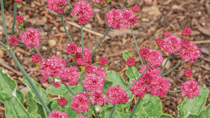 Best Native Plants for California