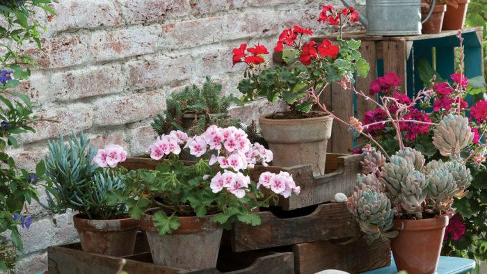 Tips for Bringing Tender Plants Back Inside