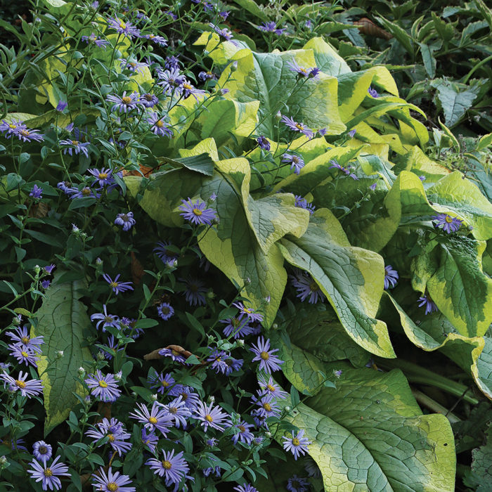 Plants that Freshen Up the Fall Garden