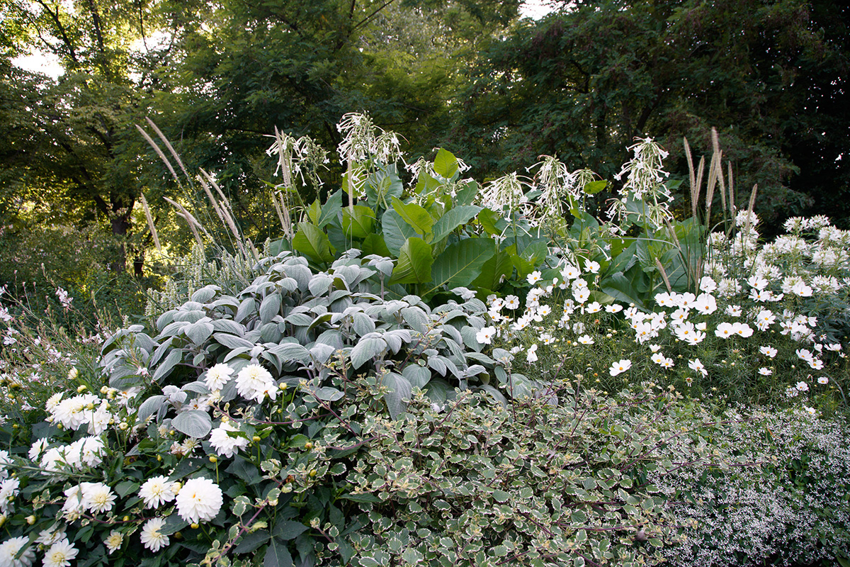 Stockholm's Lusthusportens Park flowers