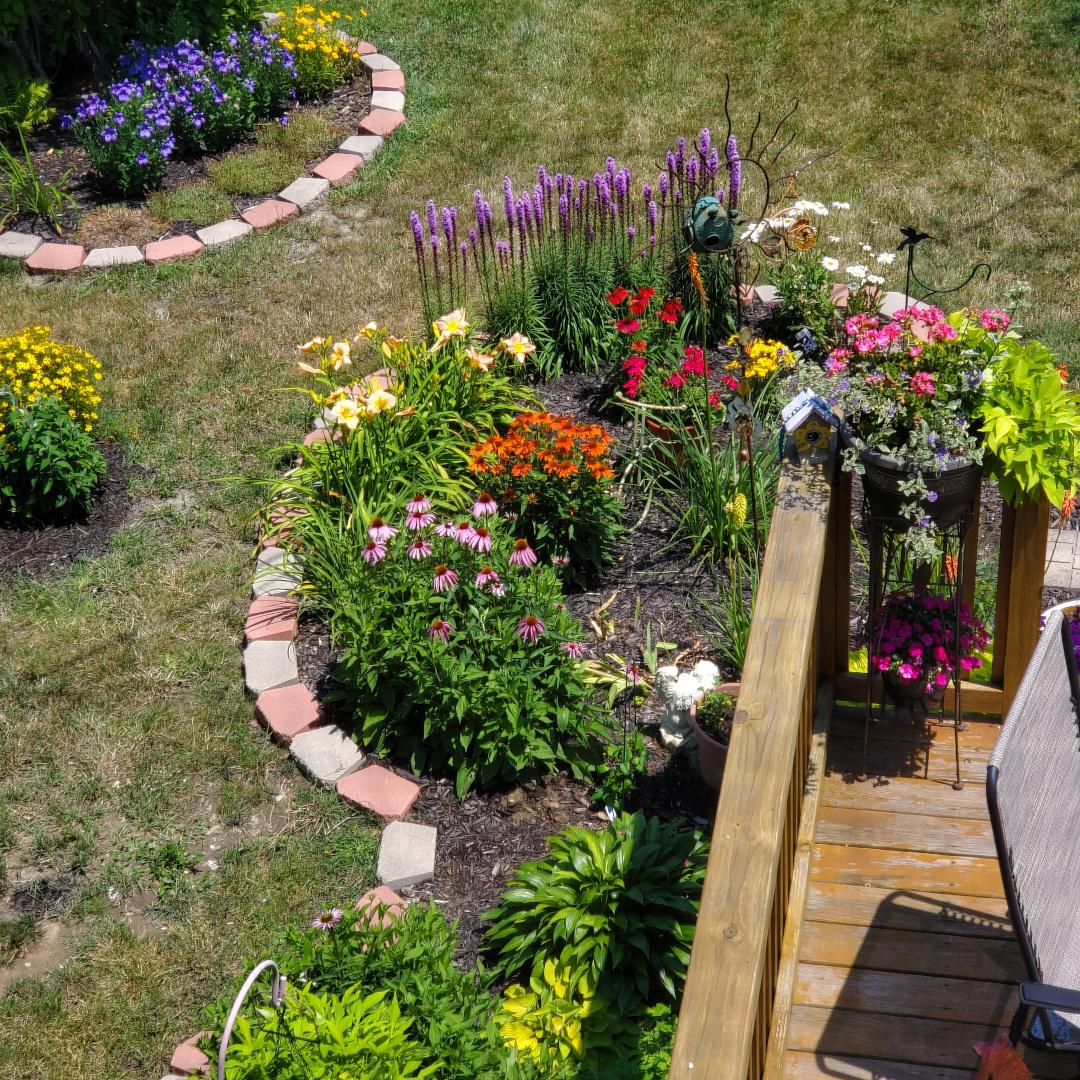 garden bed full of flowers