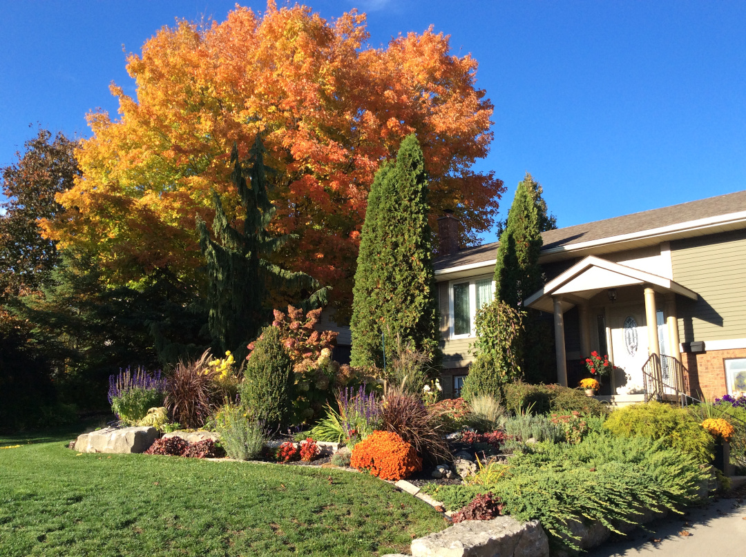 autumn colors in the front garden