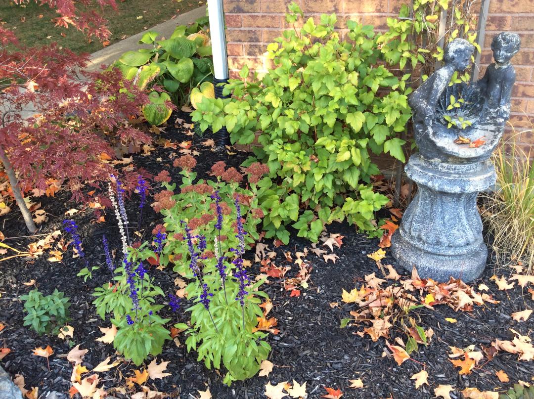 fallen leaves in a garden bed