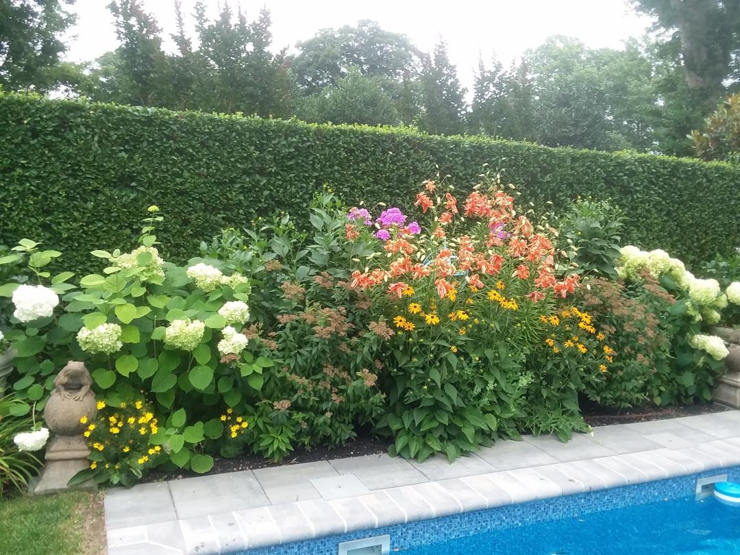 poolside garden