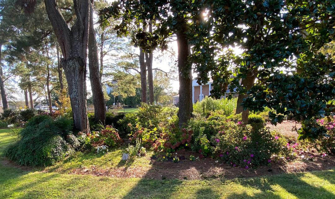 garden under pine trees