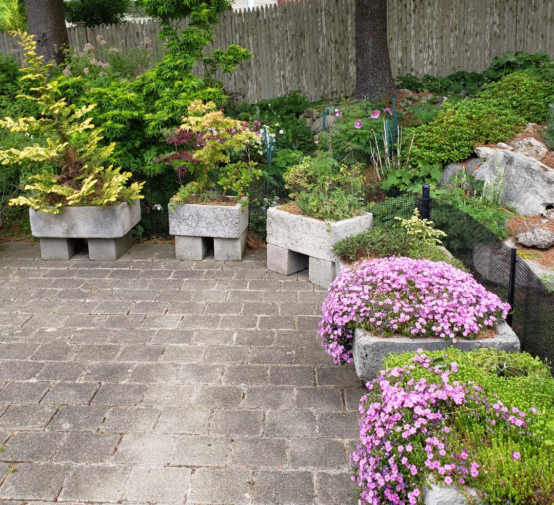 small perennials and shrubs