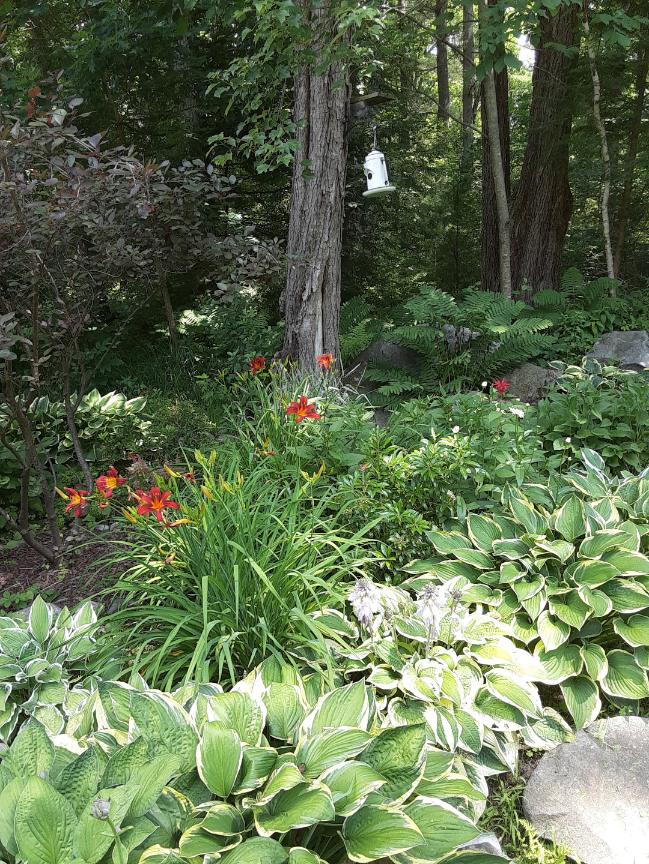 bright shade garden