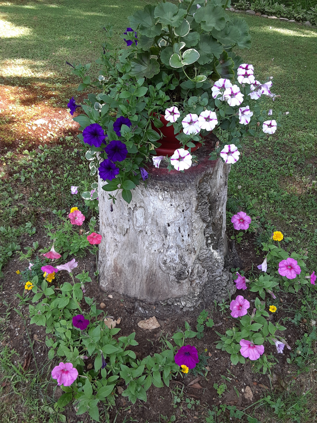 tree stump as plant stand