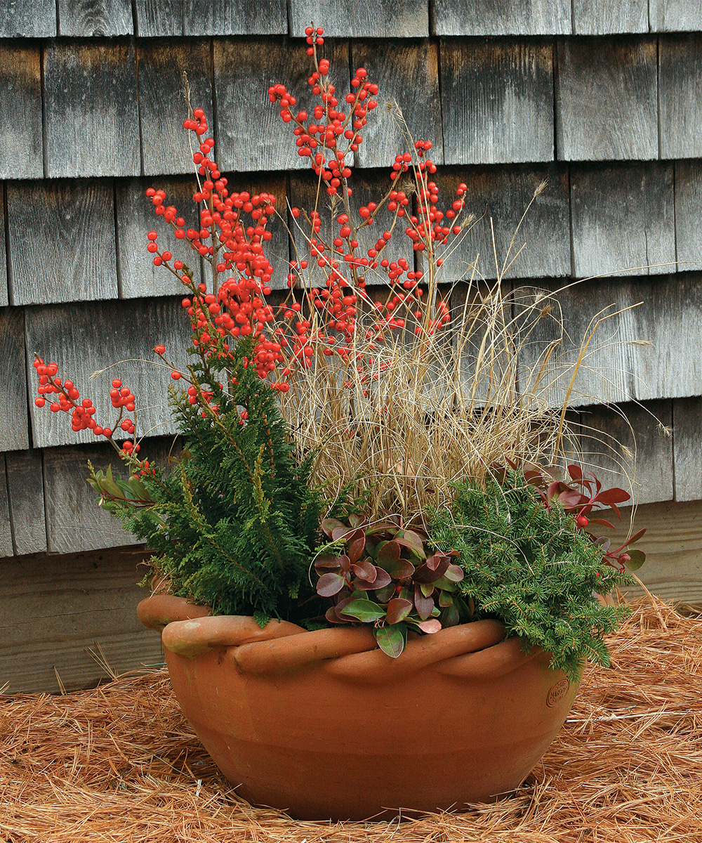 winter container in holiday colors