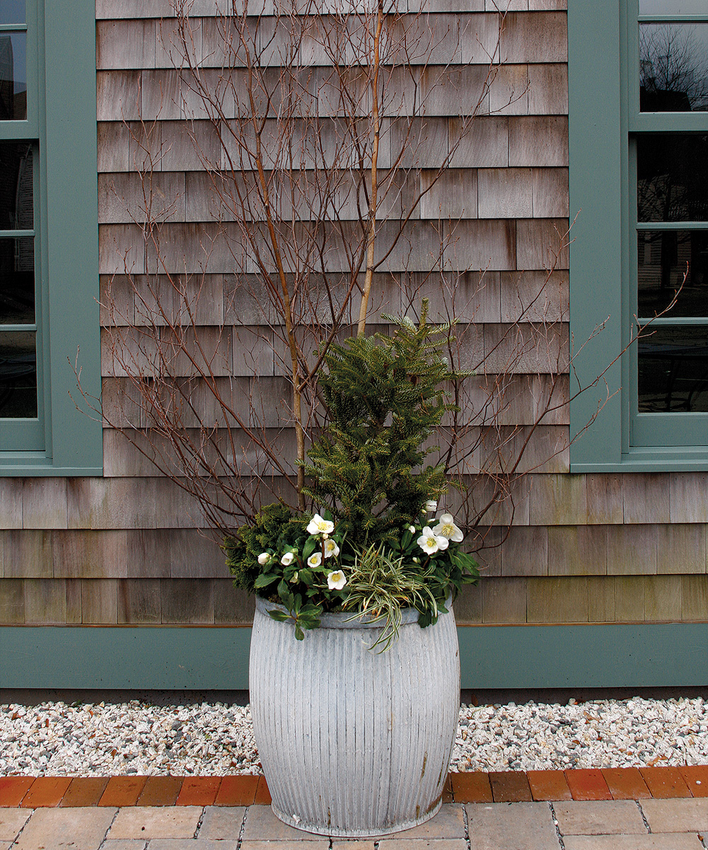 late winter container