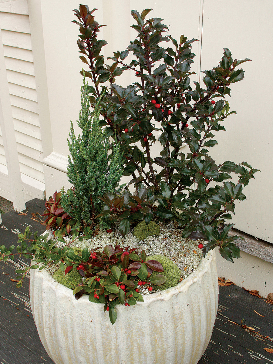 winter container with reindeer moss