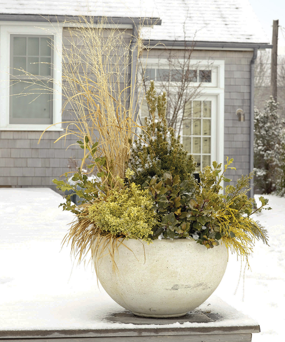 gold winter container
